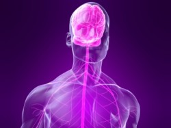 Narcotics Effects on the Nervous System
